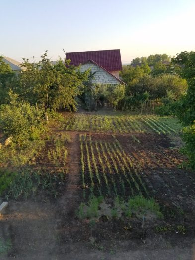 The backyard Garden ( Grădină)